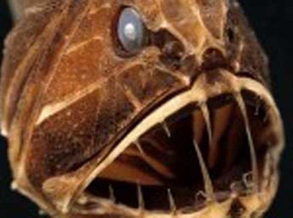 В бездне океана в США нашли неизвестного науке монстра
