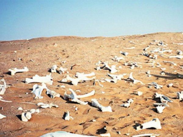 Ученые выяснили, что стало причиной массовых вымираний животных