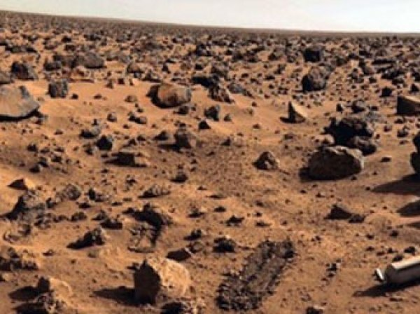 Уфологи нашли на Марсе живого медведя с шерстью и хвостом
