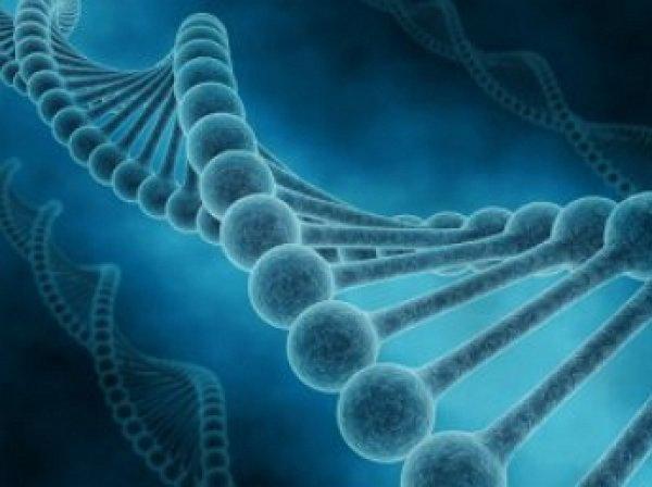 Ученые назвали главные гены, ответственные за продолжение жизни