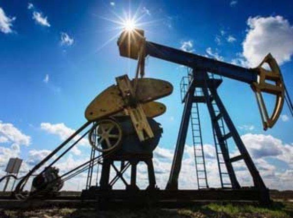 ОПЕК: цены на нефть вырастут до  за баррель к 2040 году