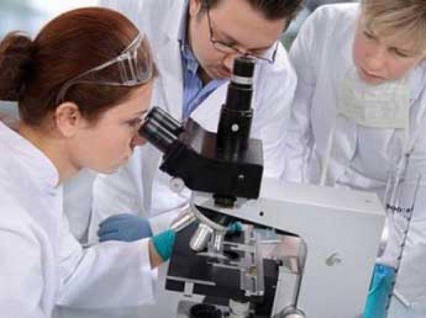Американские биоинженеры вырастили мини-мозг человека