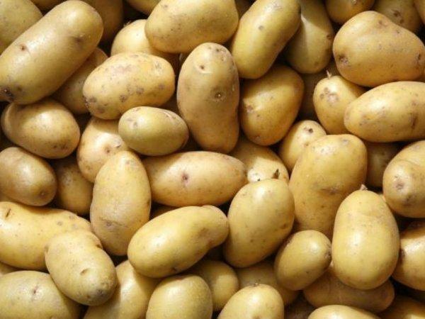 NASA собирается выращивать картофель в марсианских условиях