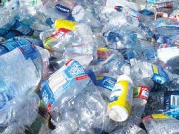 Японские ученые обнаружили бактерии, поедающие пластик