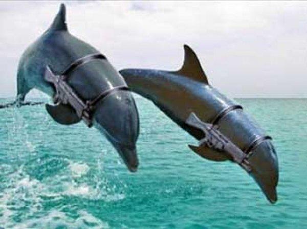 Минобороны РФ намерено приобрести пять дельфинов за 1,75 млн рублей