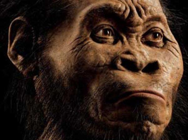 Ученые: поедание мяса сделало из обезьяны человека