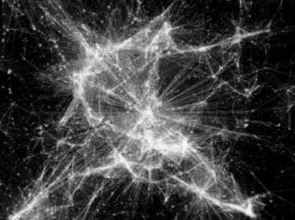 """Ученые показали Вселенную """"с точки зрения Бога"""" (видео)"""