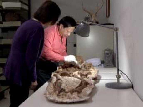 Археологи нашли на Тайване 4800-летние останки матери с ребенком на руках