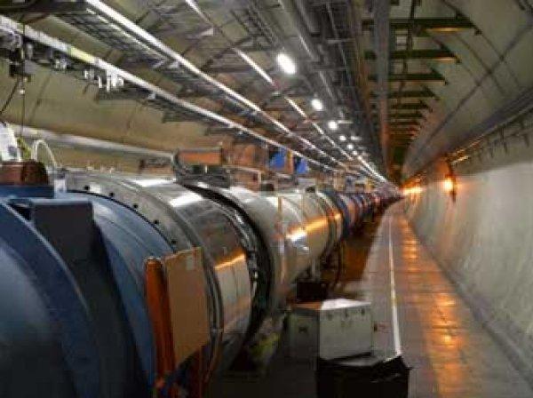 Хорек сломал Большой адронный коллайдер