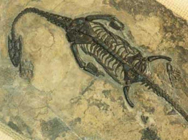 Ученые нашли в Антарктиде свыше тонны останков динозавров