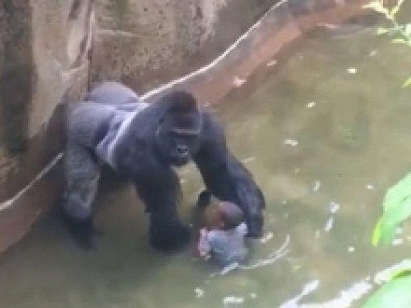 Мать ребенка, упавшего в вольер к горилле в зоопарке в США, рассказала о случившемся