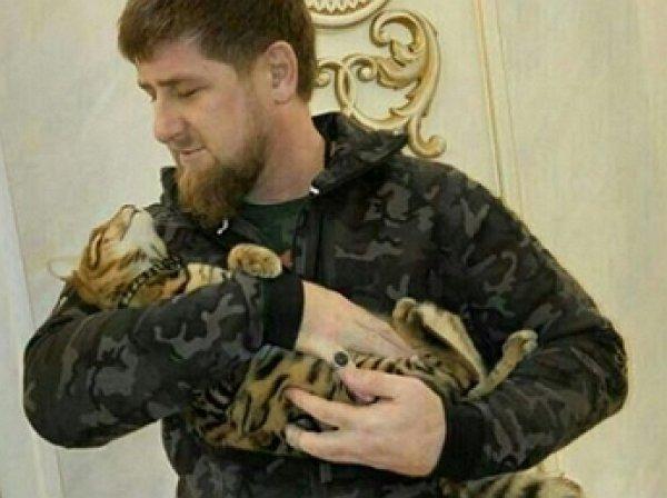 Кадыров ответил американскому комику на шутку о розыске его кошки