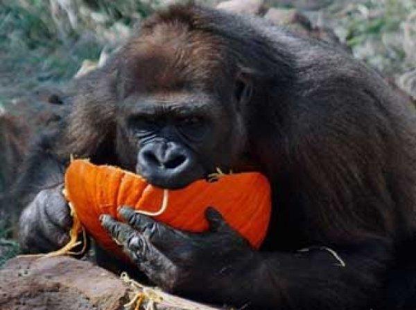 В США тысячи людей требуют наказать родителей мальчика, из-за которого убили гориллу
