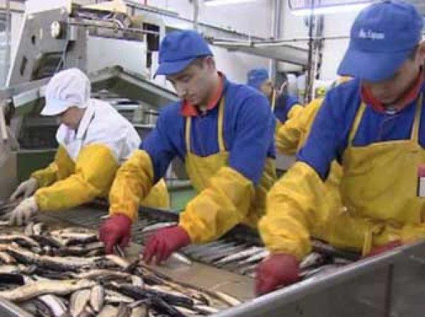 После жалобы Путину рыбокомбинат на острове Шикотан признан банкротом