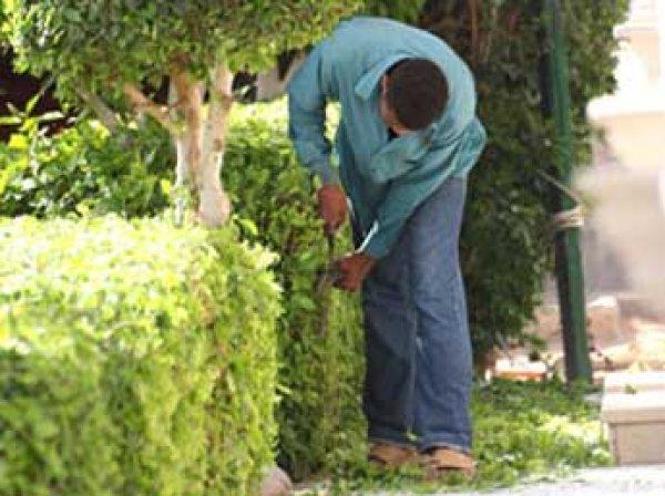 В Латвии садовник выстриг свастику у президентского замка