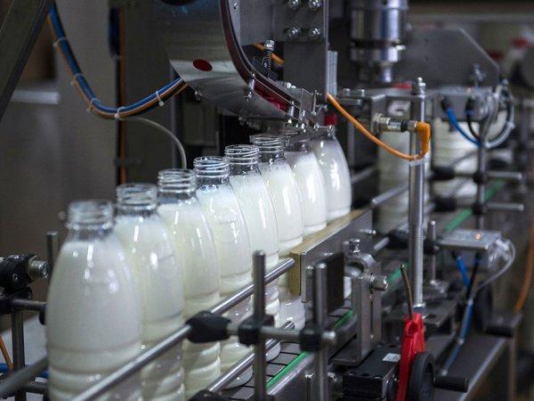 СМИ выяснили, как на российских заводах тайком добавляют гипс и известь в молоко