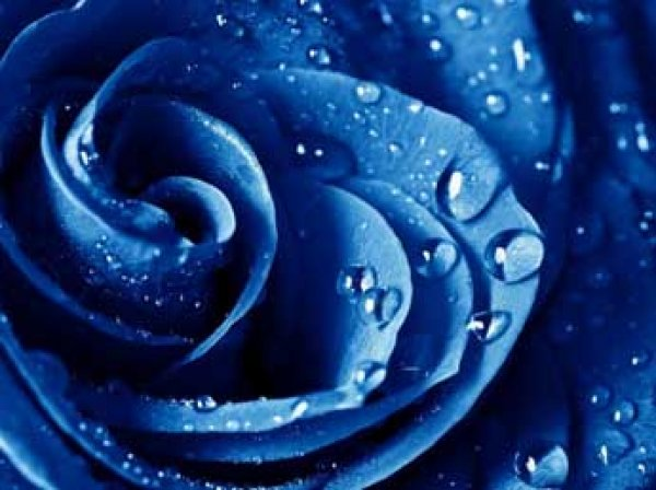 Ученые выяснили, как синий цвет влияет на организм человека