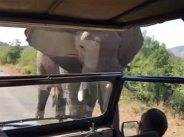 Шварценеггер опубликовал видео своего бегства от разъяренного слона (ВИДЕО)