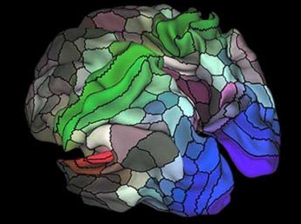 Ученые нашли в мозге человека около ста неизвестных областей