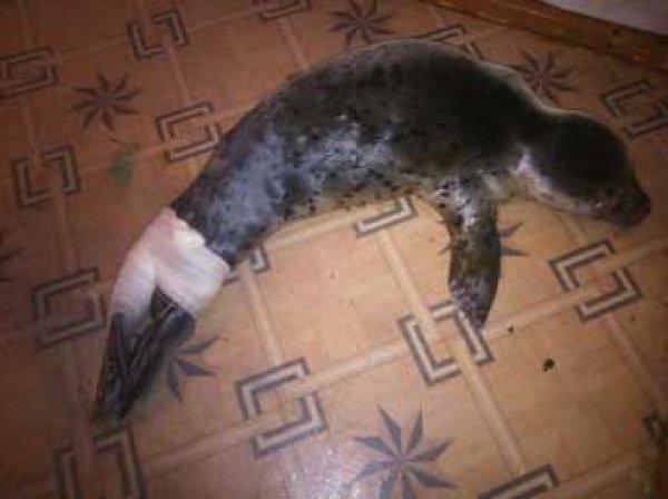 На Сахалине дети палками до смерти забили детеныша тюленя