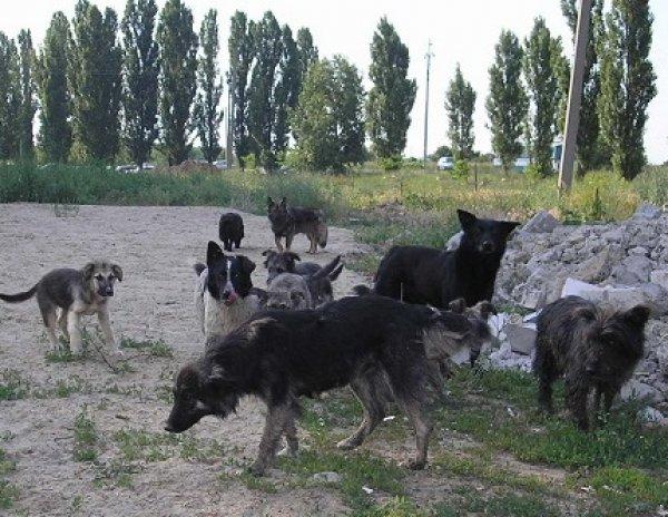 СК изучает ВИДЕО с расстрелом бездомных собак из депутатской машины
