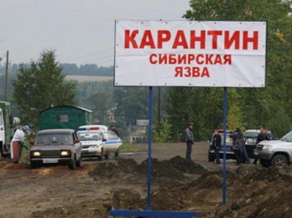 На Ямале вспышка сибирской язвы: госпитализированы пятеро детей, погибло более 1 тыс. оленей