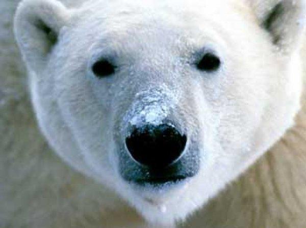 Сеть взорвали селфи мамы и дочки с мертвым белым медведем (ФОТО)