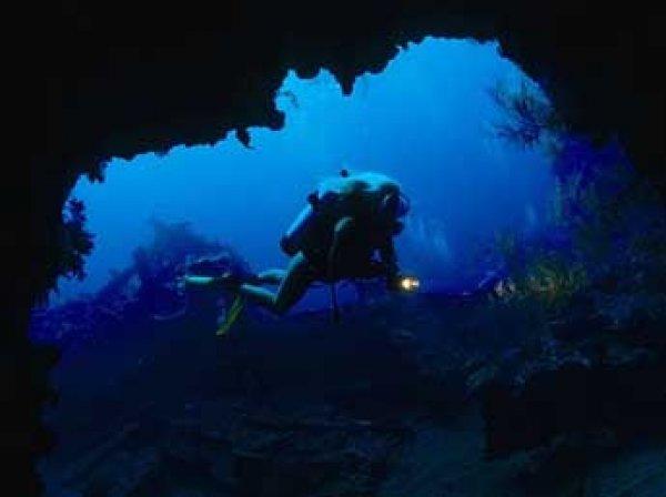Ученые нашли на дне Черного моря уникальные живые организмы