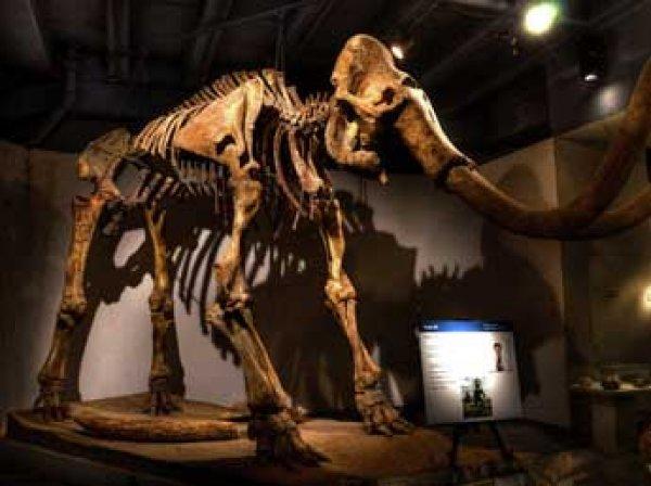 Ученые выяснили, почему вымерли последние мамонты на Земле