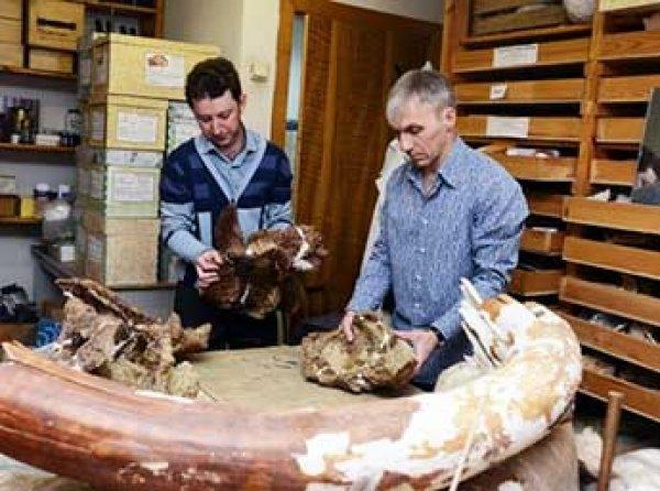 Найденный в Сибири динозавр оказался совершенно новым видом
