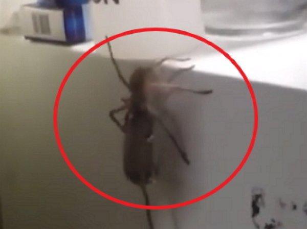 Youtube шокировало ВИДЕО, как гигантский паук поймал мышь