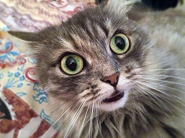 В Москве семья из четырех человек пострадала от нападения кошки: трое госпитализированы