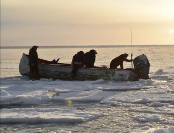 Таинственный гул со дна Арктики распугал всех птиц и животных