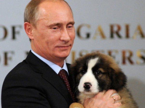 Путин поддержал ужесточение наказания за жестокое обращение с животными