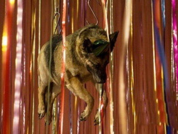 """""""Позор Эрмитажу"""" не разделили в музее: в Эрмитаже прокомментировали выставку мертвых животных (ФОТО)"""