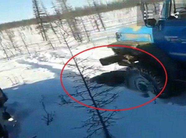На YouTube появилось ВИДЕО допроса живодера, забившего бурого медведя ломом в Якутии