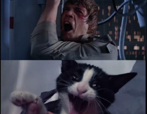 """YouTube """"взорвала"""" ВИДЕОпародия с котами на """"Звездные войны"""""""