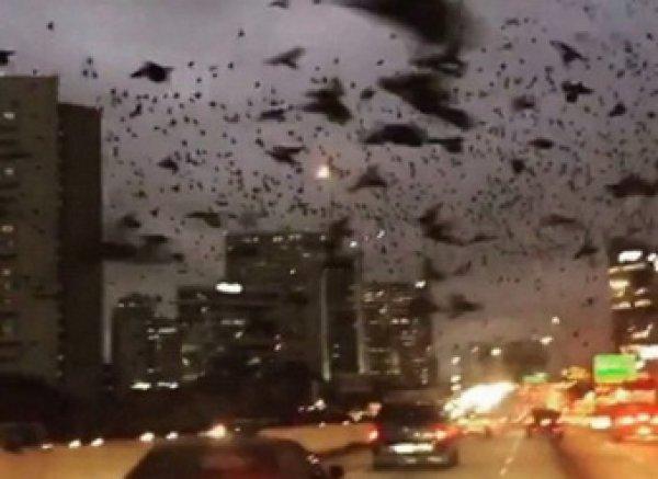 """YouTube ВИДЕО с трассы в Хьюстоне напоминало ужастик """"Птицы"""" Хичкока"""