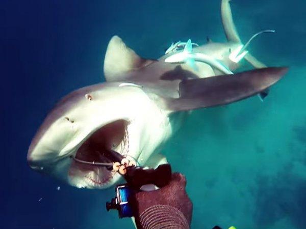 YouTube ВИДЕО с дайвером, отбившемся от акулы, стало хитом в Сети