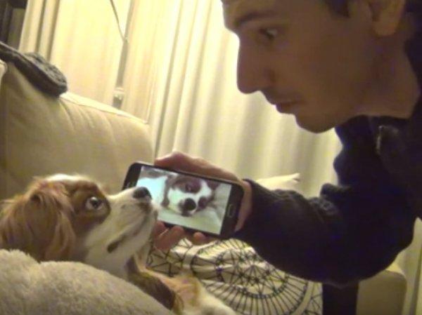 YouTube ВИДЕО с храпящей собакой стало хитом в Интернете
