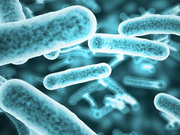 Ученые рассказали, как внеземные бактерии могут уничтожить человечество
