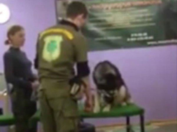YouTube шокирован ВИДЕО избиения собаки в кинологическом центре Петербурга