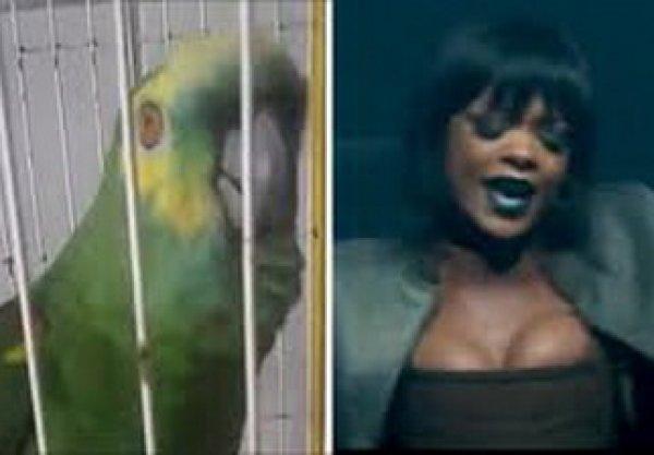 YouTube ВИДЕО с попугаем, исполнившим песню Эминема и Рианны, стало хитом в Сети
