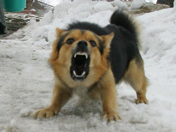 В Свердловской области собаки загрызли семилетнюю девочку