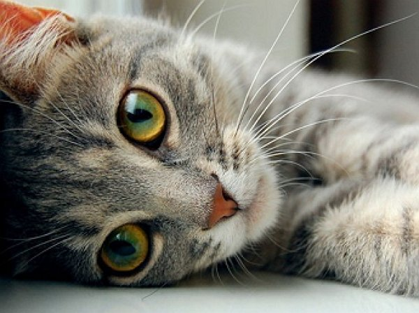В Карелии кот оставил без света более двух тысяч человек
