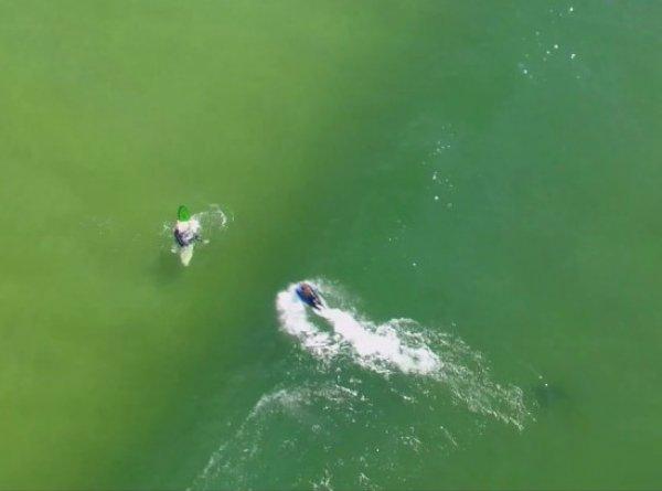 YouTube шокировало ВИДЕО охоты акулы-людоеда на серферов в Австралии