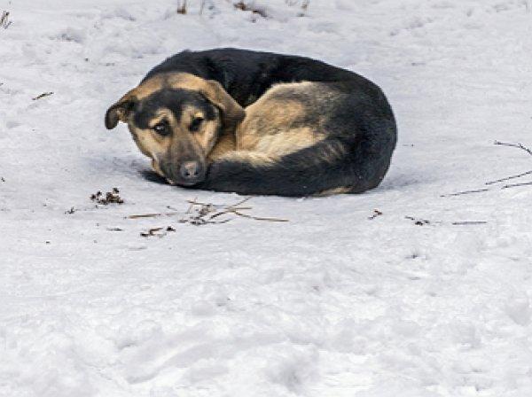 Собака спасла жизнь брошенному на морозе ребенку на Алтае