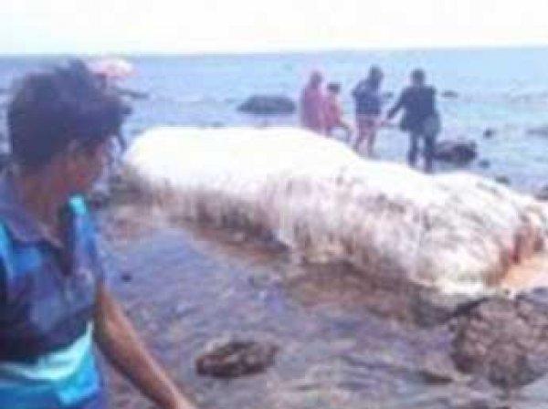 Гигантский волосатый монстр в море напугал жителей Филиппин (ФОТО)