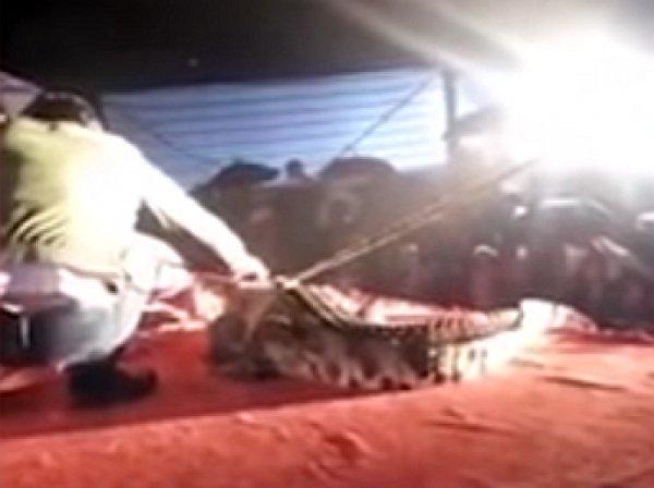 YouTube шокировало ВИДЕО, как крокодил отгрыз лицо дрессировщику во время трюка