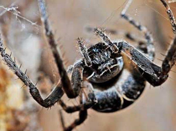 Ученые: пауки могут за год сожрать всех людей на Земле